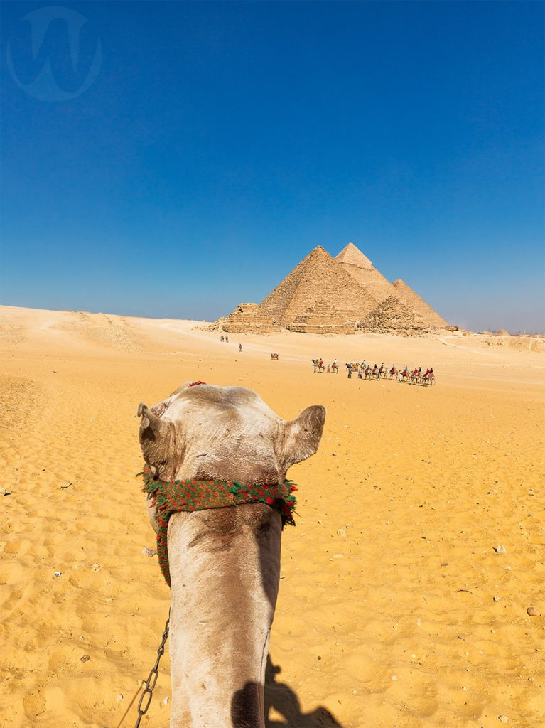 Pyramids with a camel head